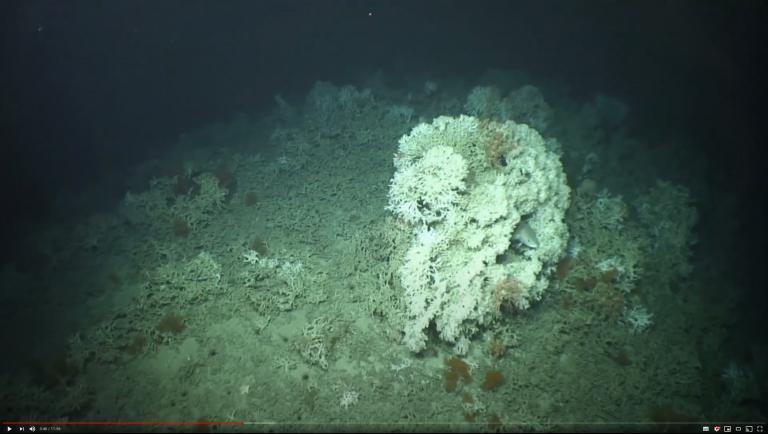 Explore Ireland's deep sea corals